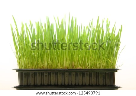 Green grass in a box