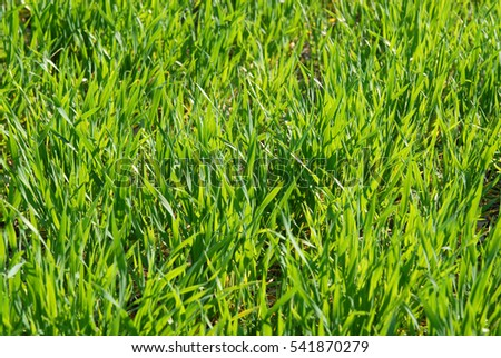 green grass in a meadow to the beetle