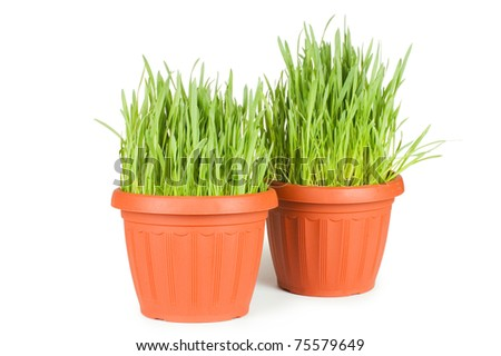 Green grass in a pot isolated - stock photo