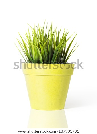 Green grass in a yellow flower pot isolated on white background - stock photo