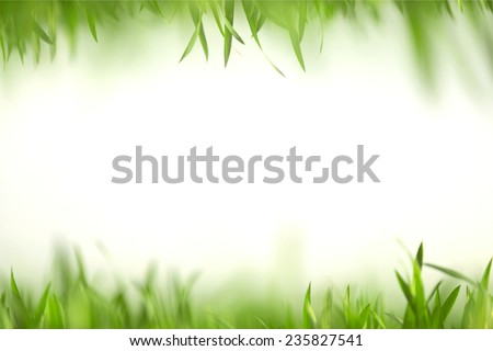 Green grass in artistic composition with copy space