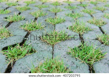 Green grass in cement - stock photo