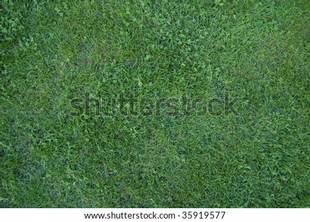 Green grass in city park - stock photo