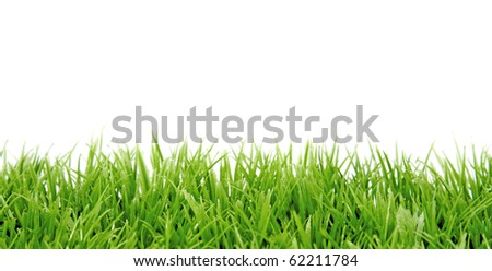 green grass in closeup over white background