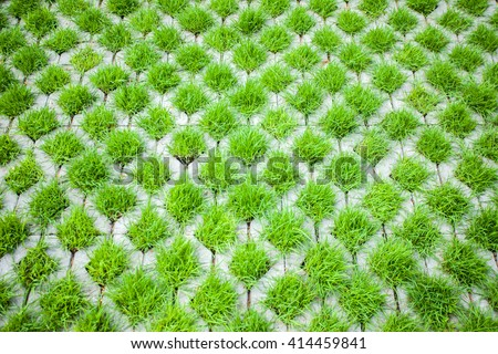 green grass in concrete box .walking street in the garden - stock photo