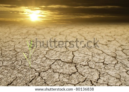 Green grass in dried cracked mud