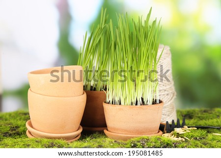 Green grass in flowerpots and gardening tools, outdoors - stock photo
