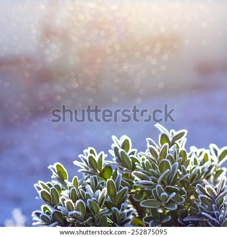 green grass in hoarfrost - stock photo