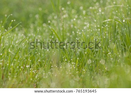 summer outdoor backgrounds. Green Grass In Morning Dew, Beautiful Summer Outdoor Background. Backgrounds R