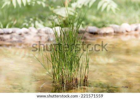 green grass in nature - stock photo