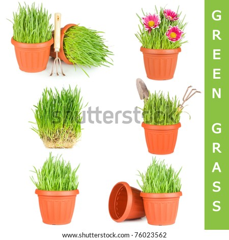 Green grass in pot isolated on white - stock photo