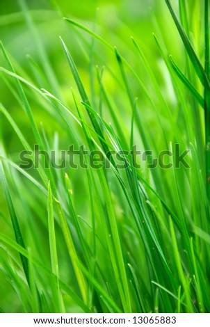 green grass in summer sun - stock photo