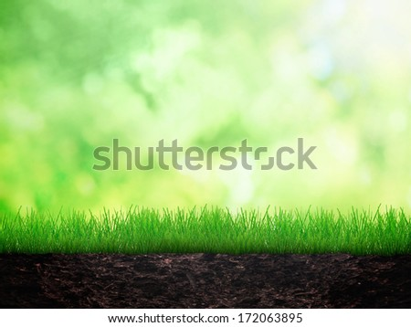 Green grass in the dirt - stock photo