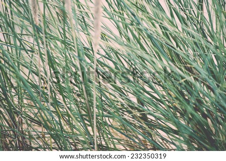 green grass in the dunes by the sea. Vintage effect. - stock photo
