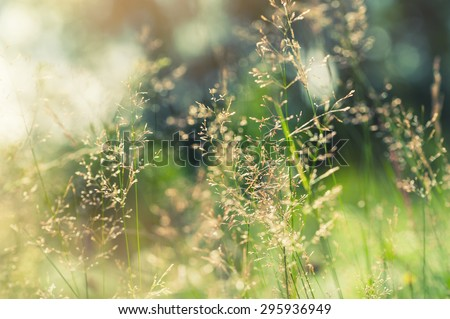 Green grass in the field with sunbeams. Blurred summer background, selective focus. - stock photo