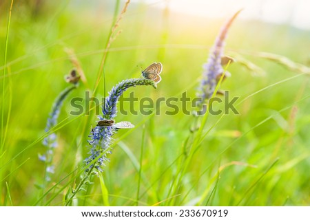 Green grass in the meadow and butterflies. Beautiful summer landscape. Soft focus - stock photo