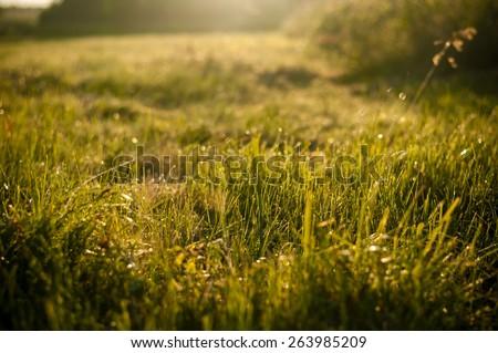 Green grass in the morning sun - stock photo