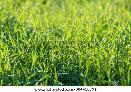 Green grass in the sunshine - stock photo