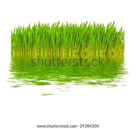 Green grass in water - stock photo