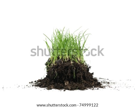Green grass isolated against a white background - stock photo