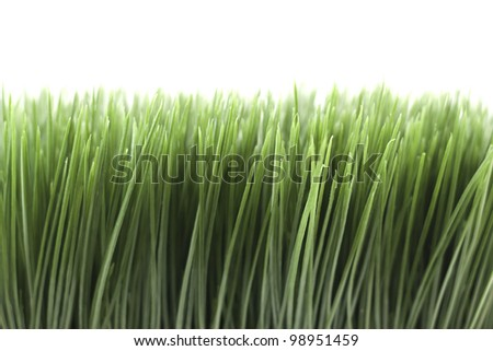 green grass isolated on a white background - stock photo