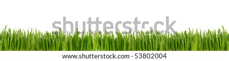 Green grass isolated on the white background. - stock photo