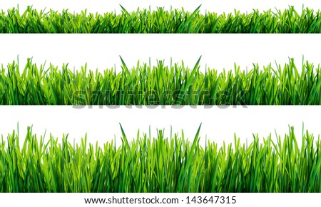 Green grass isolated on white background . - stock photo