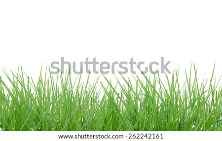 Green grass isolated on white background,This has clipping path.