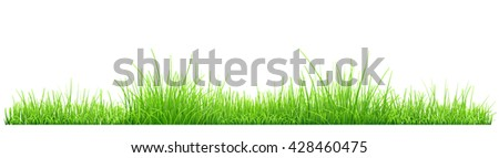 Green grass isolated on white background. Vector illustration - stock photo