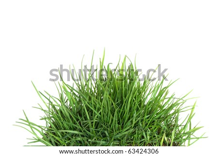 Green grass isolated on white background with clipping path