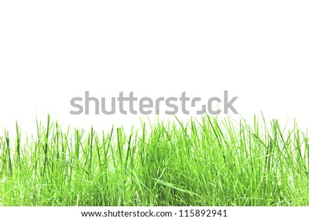 green grass isolation on the white backgrounds