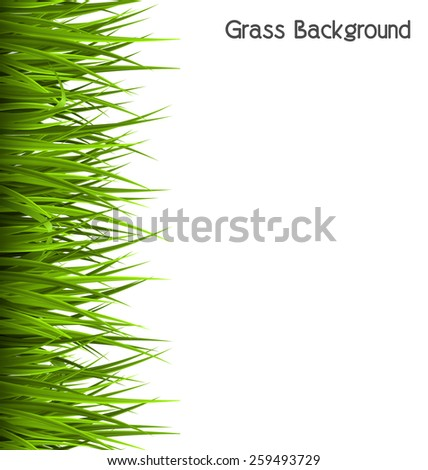 Green grass lawn isolated on white. Floral eco nature background - stock photo