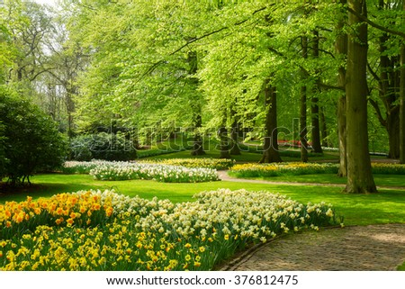 green grass lawn with trees and daffodils  in dutch garden 'Keukenhof', Holland - stock photo
