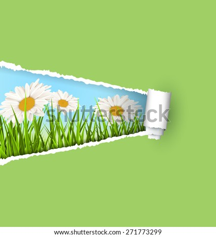 Green grass lawn with white chamomiles and ripped paper sheet isolated on green. Floral nature flower background - stock photo