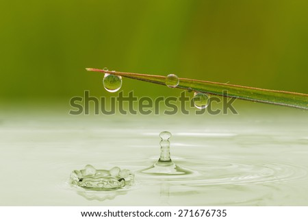 Green  grass leaves with water drops close up,  of change environment - stock photo