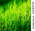 green grass macro close up - stock photo