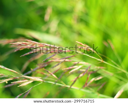 Green grass meadow background with soft focus - stock photo