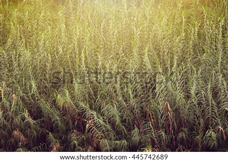 Green Grass Meadow Close-Up With Bright Sunlight. Sunny Spring Background - stock photo
