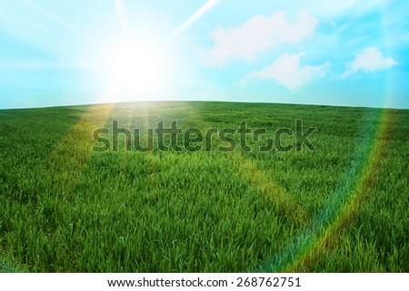 green grass meadow field  sunburst summer sunshine - stock photo