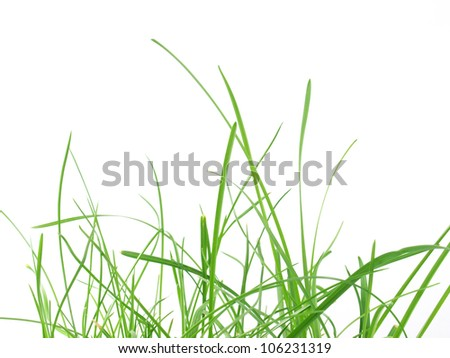 Green grass meadow isolated over white background - stock photo