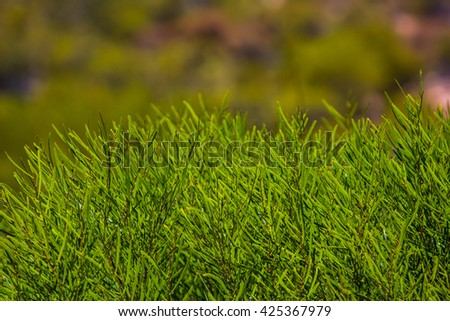 Green grass meadow with blurred background. Close up at view of side way to north of western Australia. Beautiful image in green grass.  - stock photo