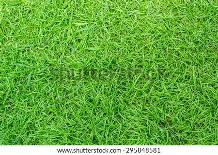 green grass. natural background texture.