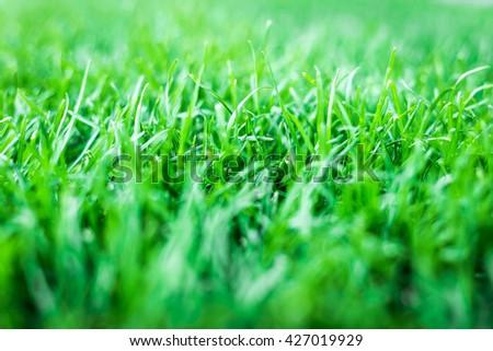green grass. natural background texture. artificial Grassgreen - stock photo