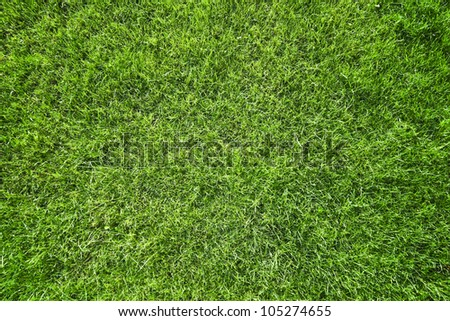 Green grass natural background. Top view - stock photo