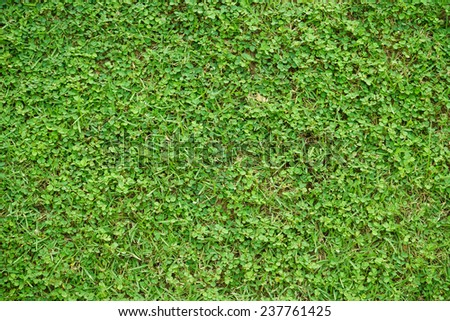 Green grass natural background. Top view. - stock photo