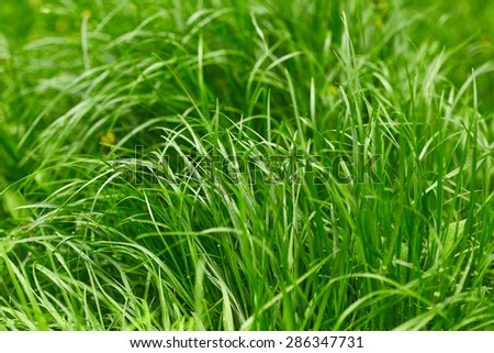 Green grass. Nature background