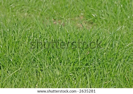 Green Grass of a Lush Cheshire Lawn, England UK - stock photo