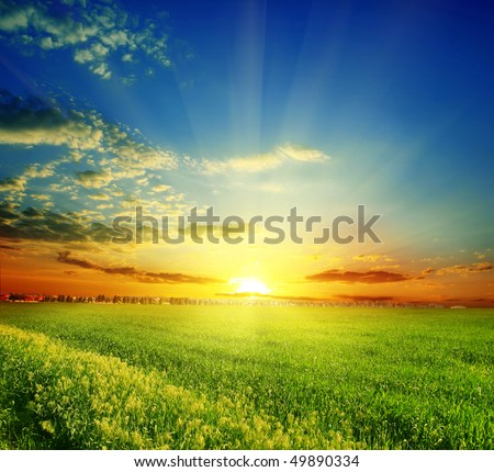 green grass on a background beautiful sunset - stock photo