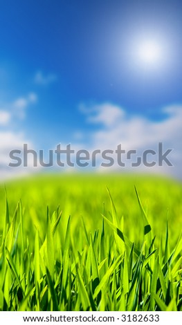 green grass on a sky background - stock photo