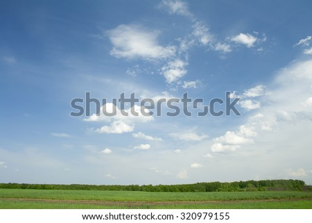 Green grass on a summer meadow. Blue sky with white clouds. Forest - stock photo